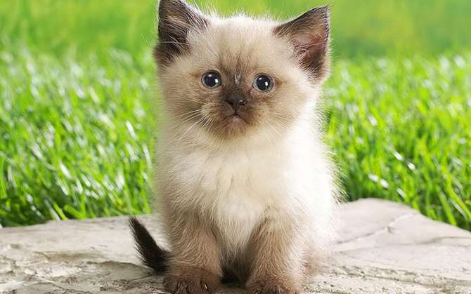 "Image of Persian kitten. Find blog topics that excite your users and create an editorial calendar. ""Persian Kitten"" by kitty.green66 is licensed under CC BY-SA 2.0"